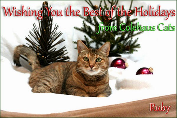 From the Colehaus Cats