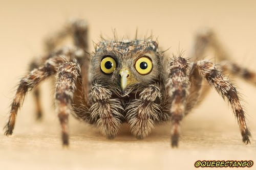 16-Owl-and-Spider-a-Spowl-Graphics-Designer-Digital-Taxidermist-Animangler-www-designstack-co