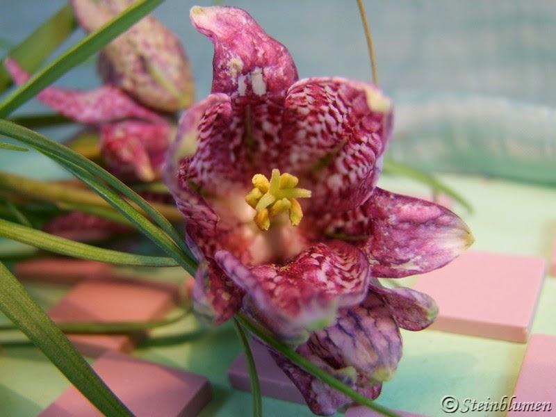 Schachbrettblume Blüte
