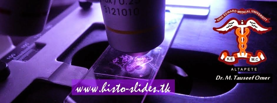 www.histo-slides.tk