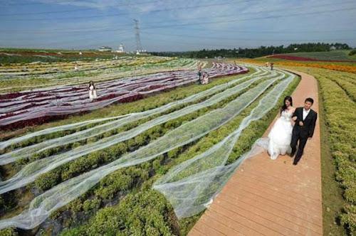 Noiva tenta entrar para o Guinness com o record de maior cauda de vestido com quase 5 KM de extensão