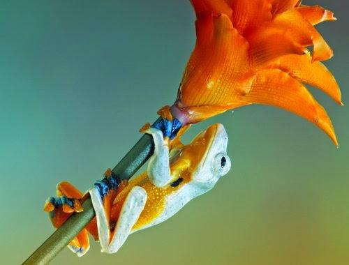 07-Wil-Mijer-Frog-Macro-Photography-www-designstack-co