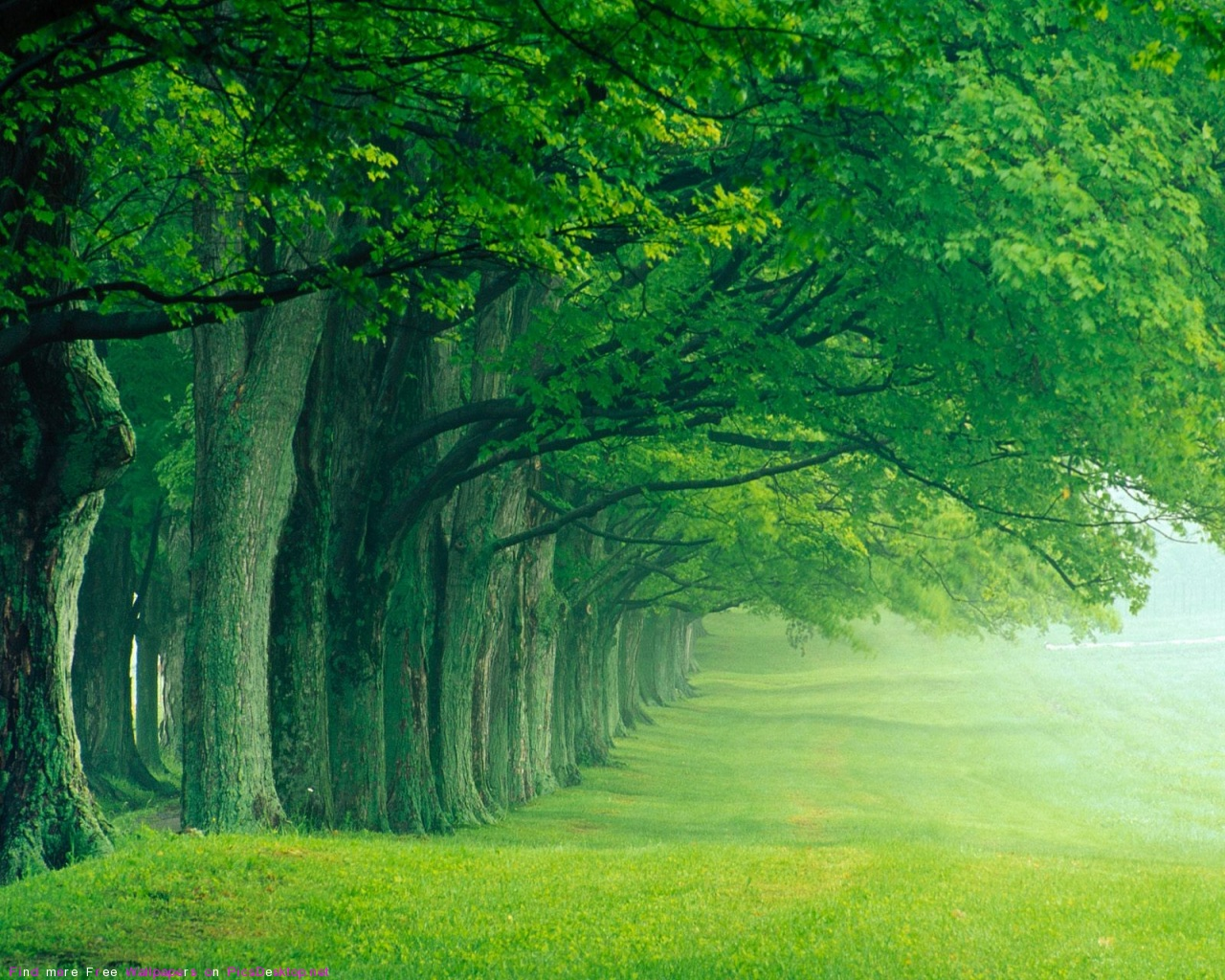 green tree forest - photo #3