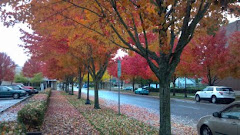 The Northwest Fall Trees