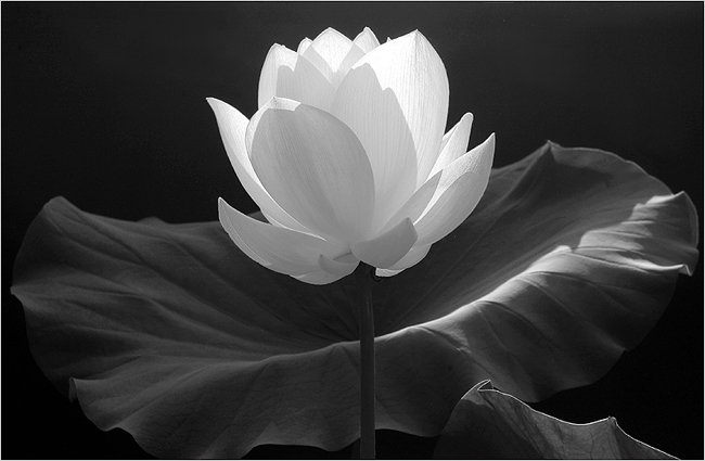 Travel brochure island of the lotus eaters the inhabitants of this island pretty much lead the life of a pot head they sit around all day eating lotus flowers wasting away their lives and not mightylinksfo