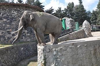 Zoológico Zacango