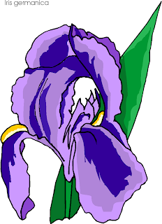 Iris Germanica Flowers Clipart