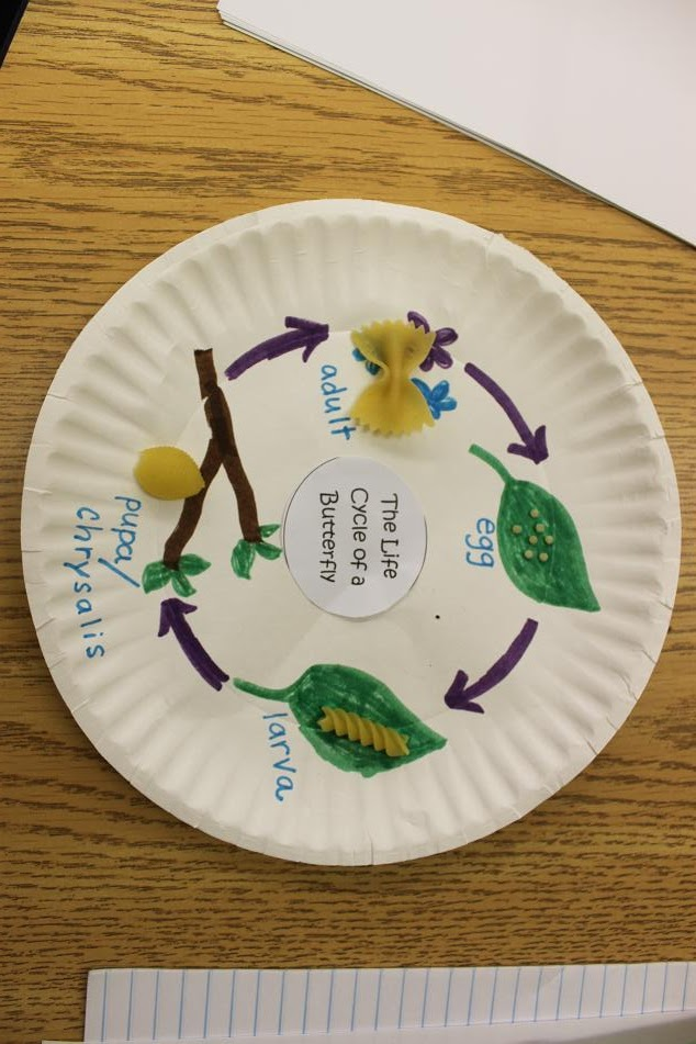 Frog Life Cycle For Kids Worksheet Simply Second Grade: E...