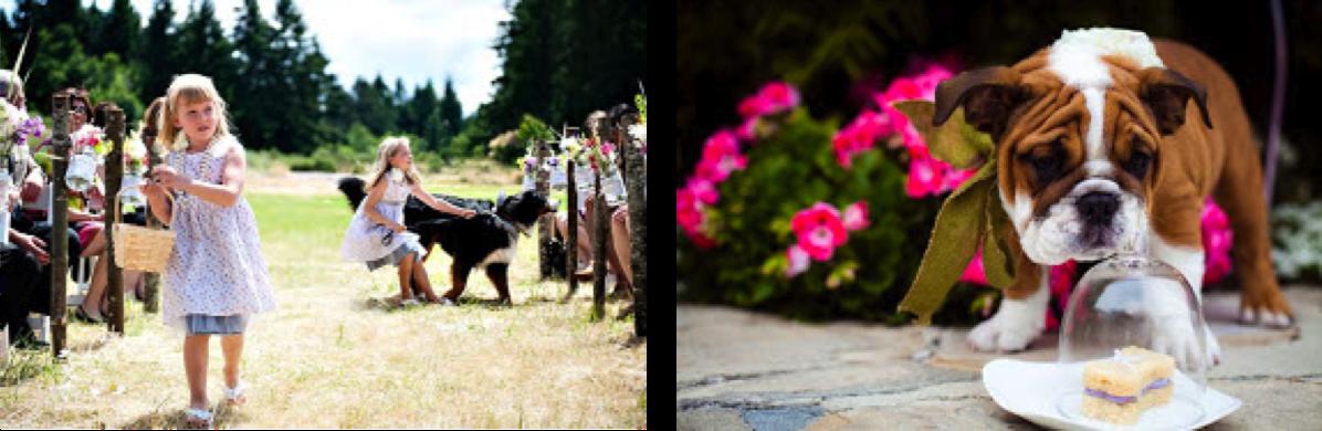 Mascotas el día de tu boda