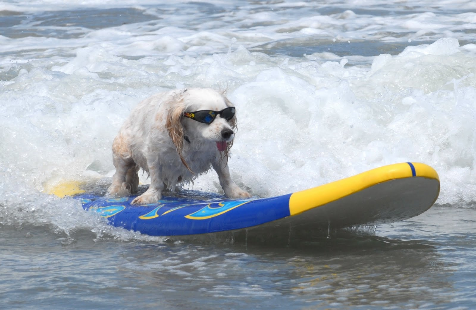 собаки-серфинг