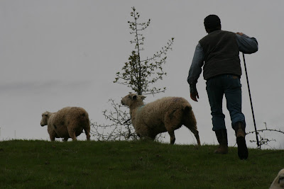 The transition to becoming a part-time shepherd