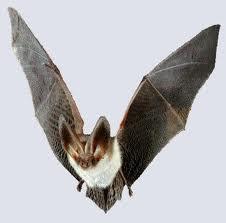 Foto kelelawar