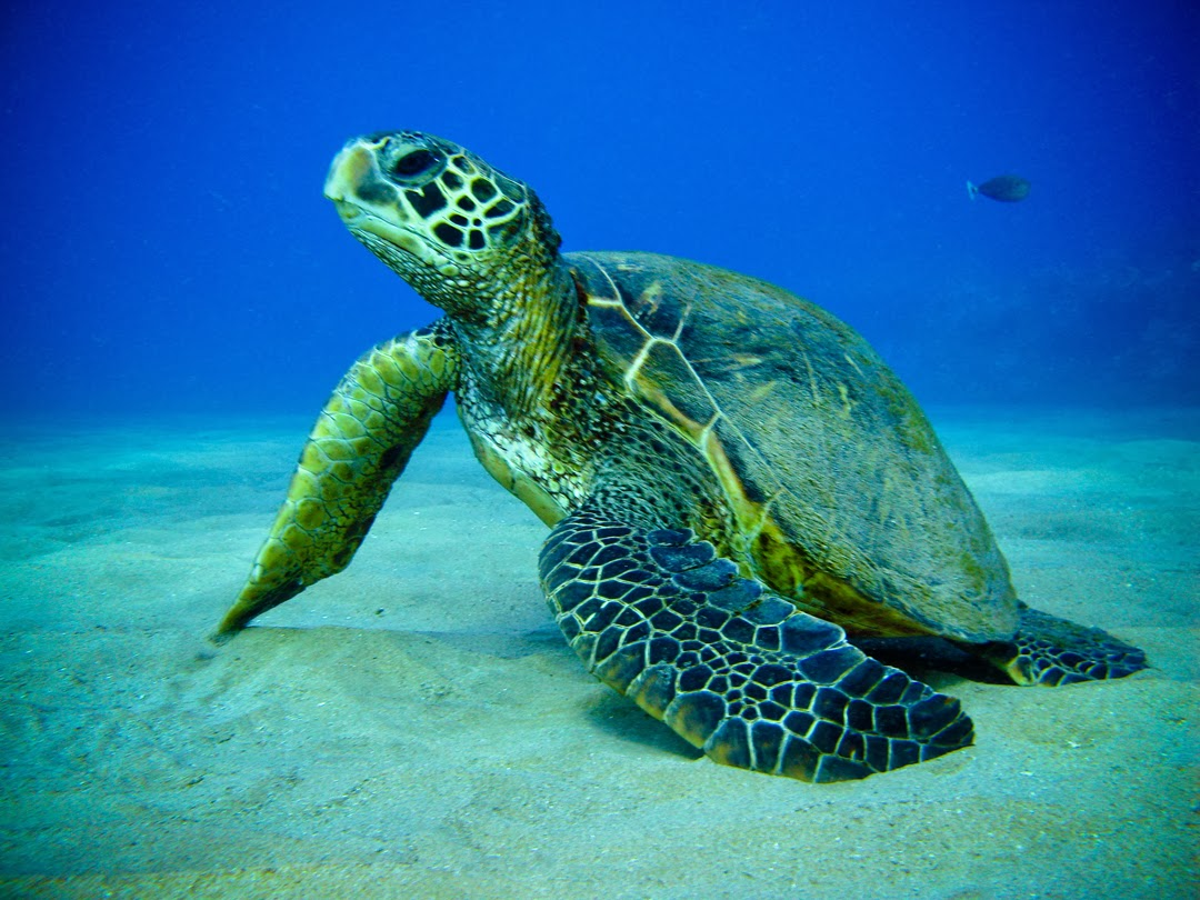rules of the jungle why are the sea turtles not suited as