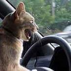 estresse ao volante