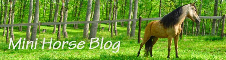 mini horse blog