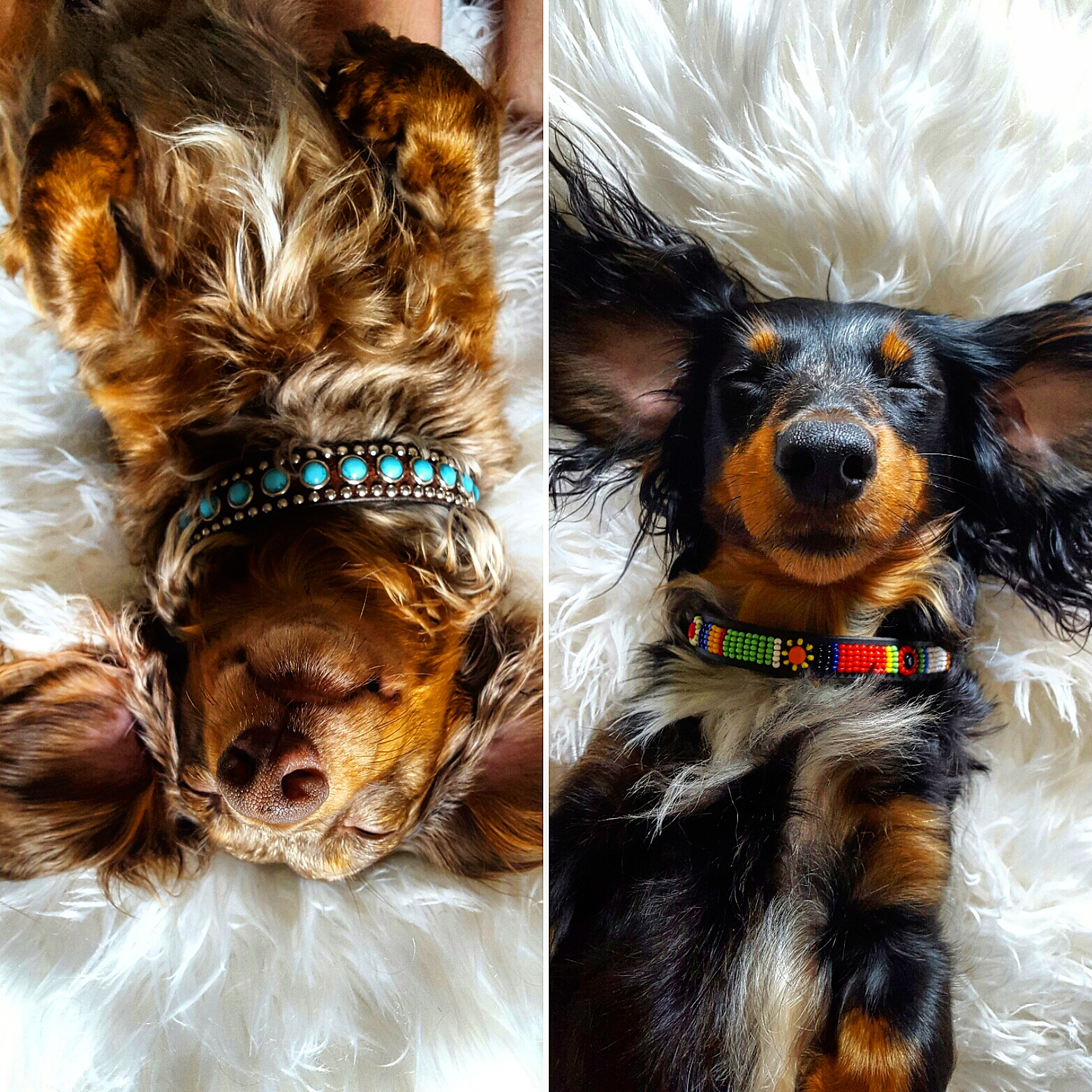 Doxie Moments
