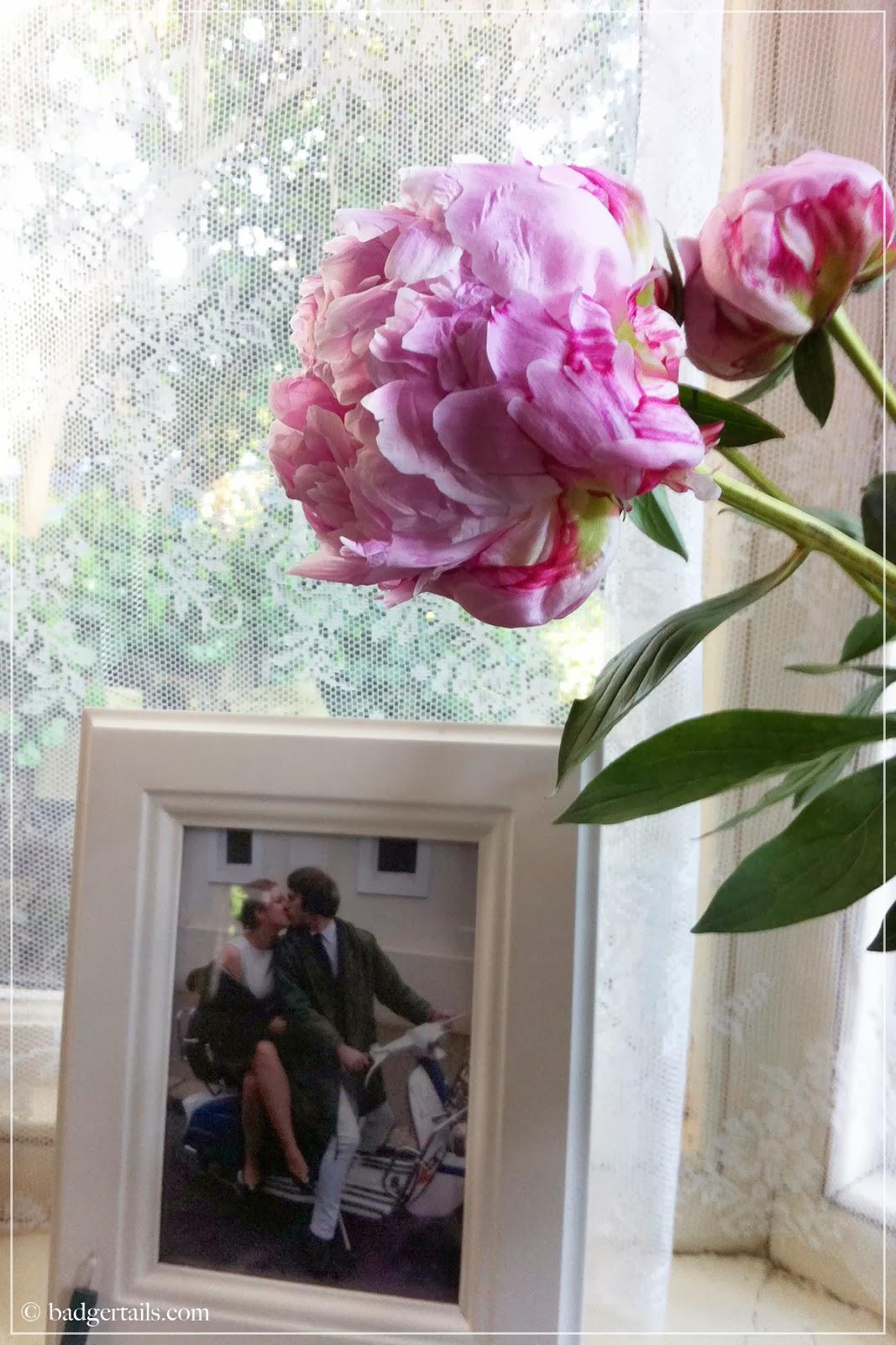 pink peony in flower on window