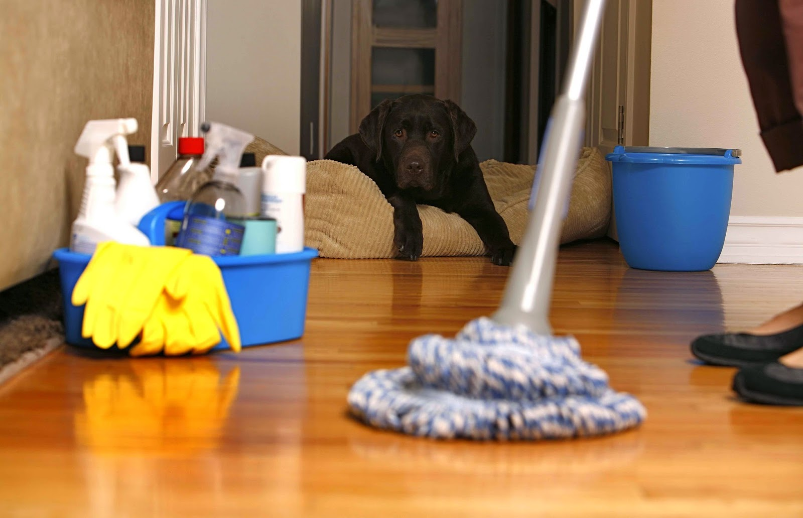 cleaning_pets