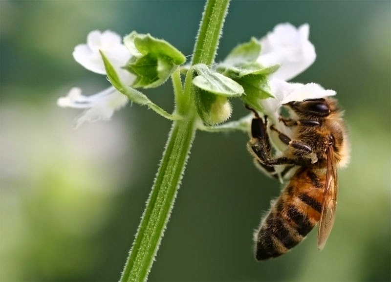 Como funciona uma colmeia de abelhas