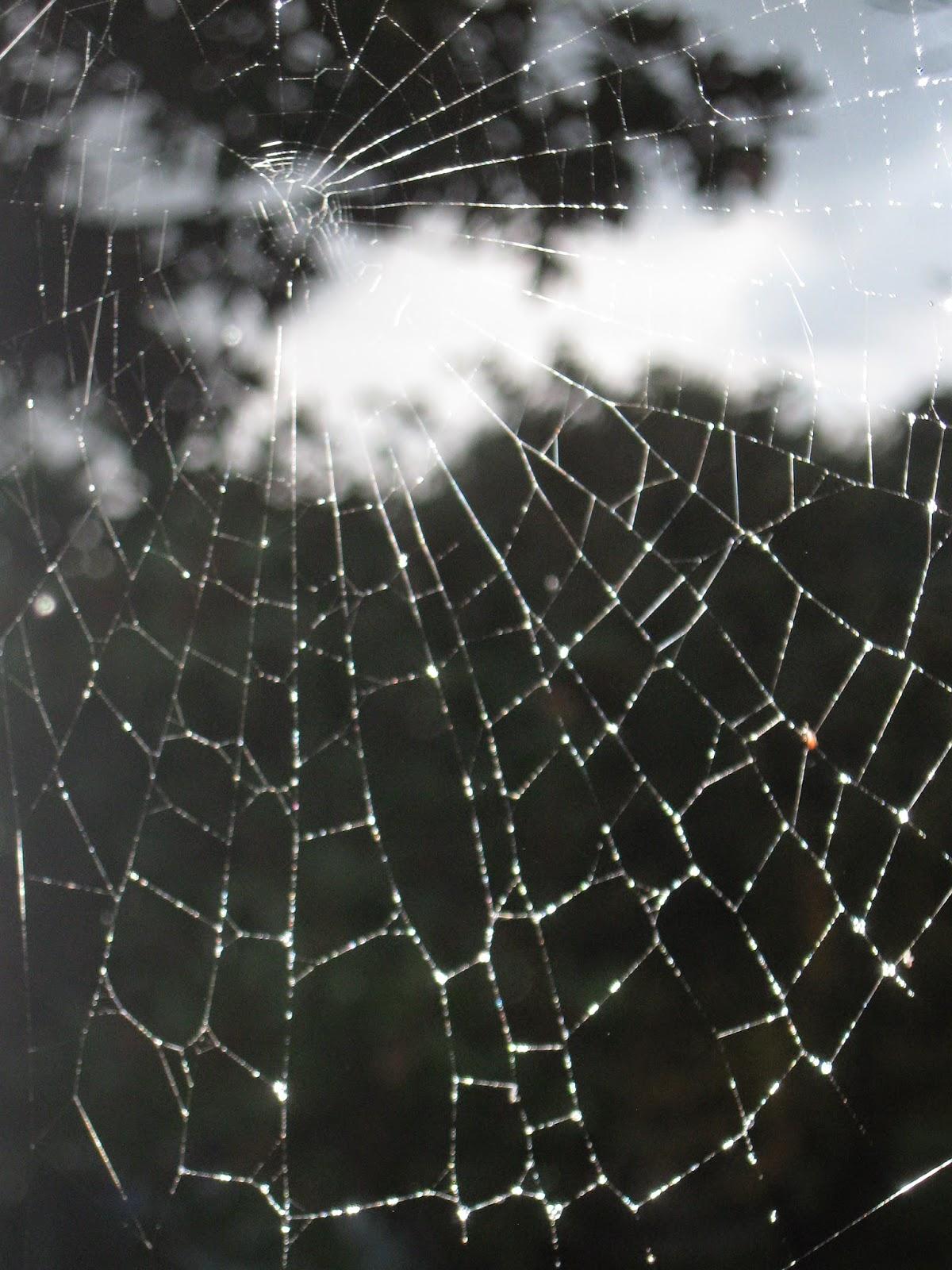 LA GRANJA DE ADRIANA: Una tarde de lluvia vista entre los hilos de ...