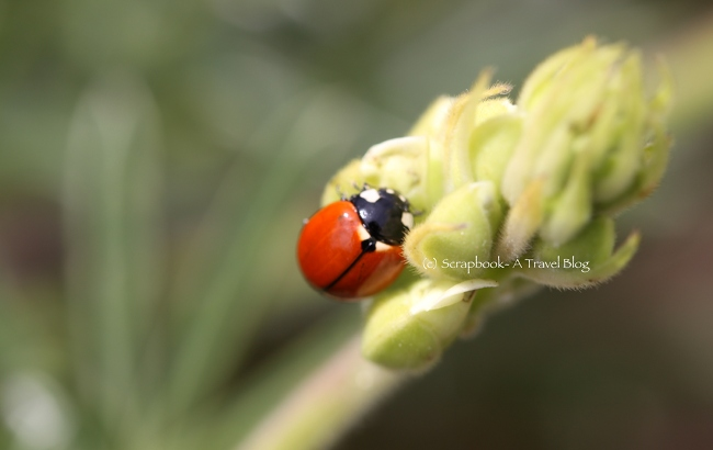 Insect Wildlife Ladybug