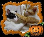 Otto e Tuffy
