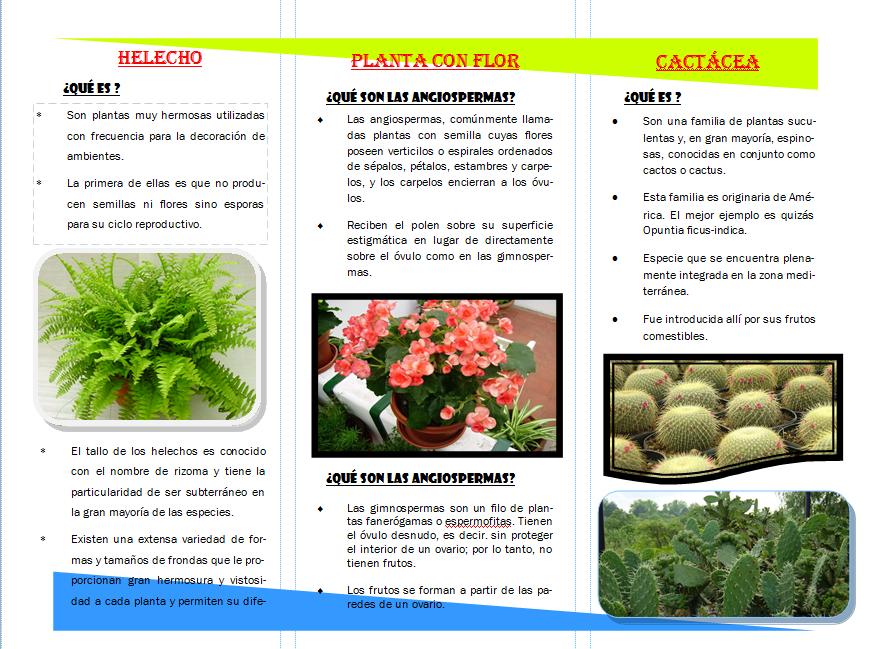 Ecolog a caracter sticas y usos de las plantas tr ptico for Marmol caracteristicas y usos