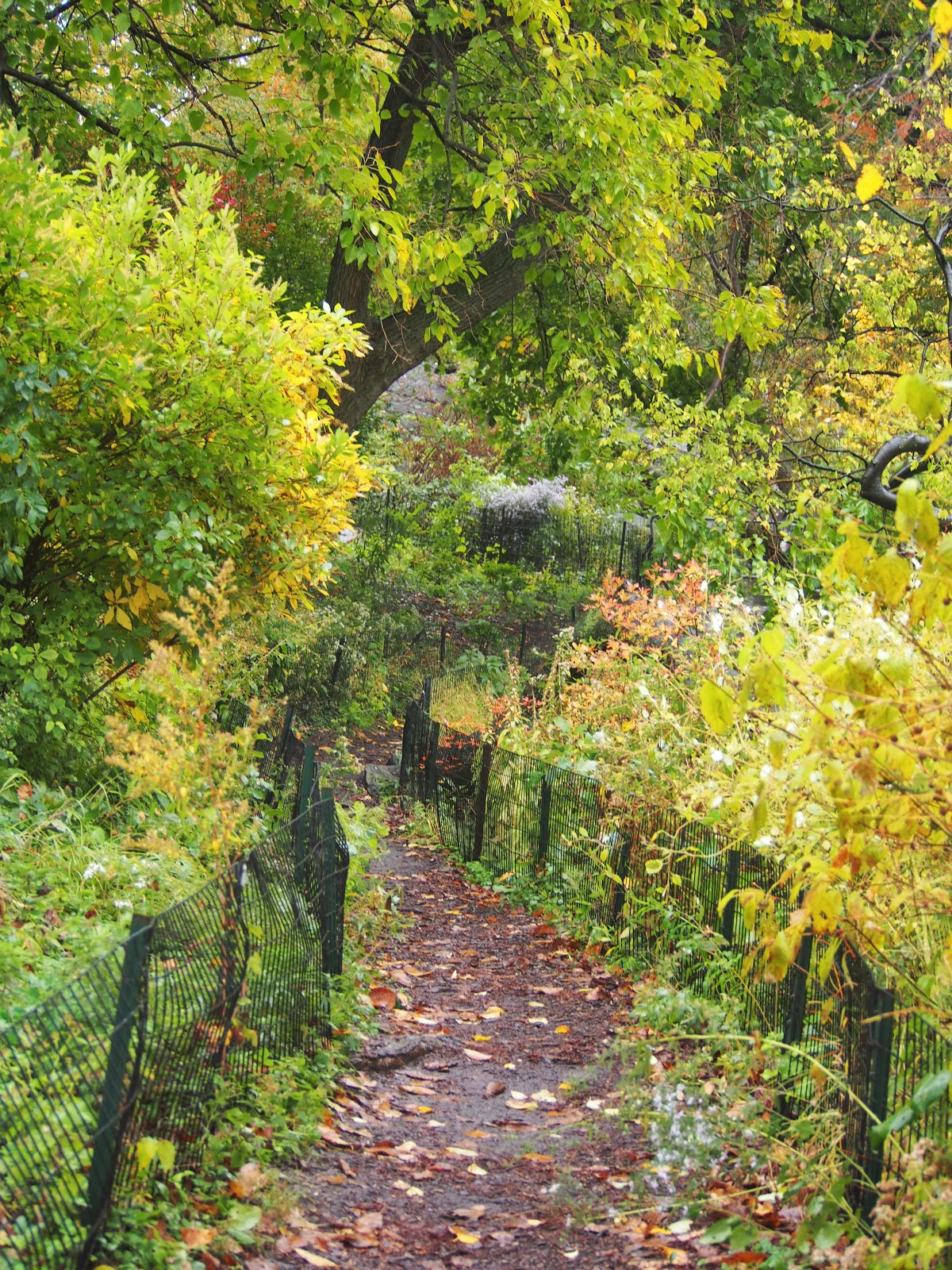 Wagner's Cove Path, #wagnerscovepath #centralpark #wagnerscove 2014 #rainyday #fall #foliage