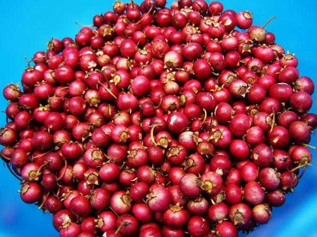 عصير التوت البري لعلاج المسالك البولية