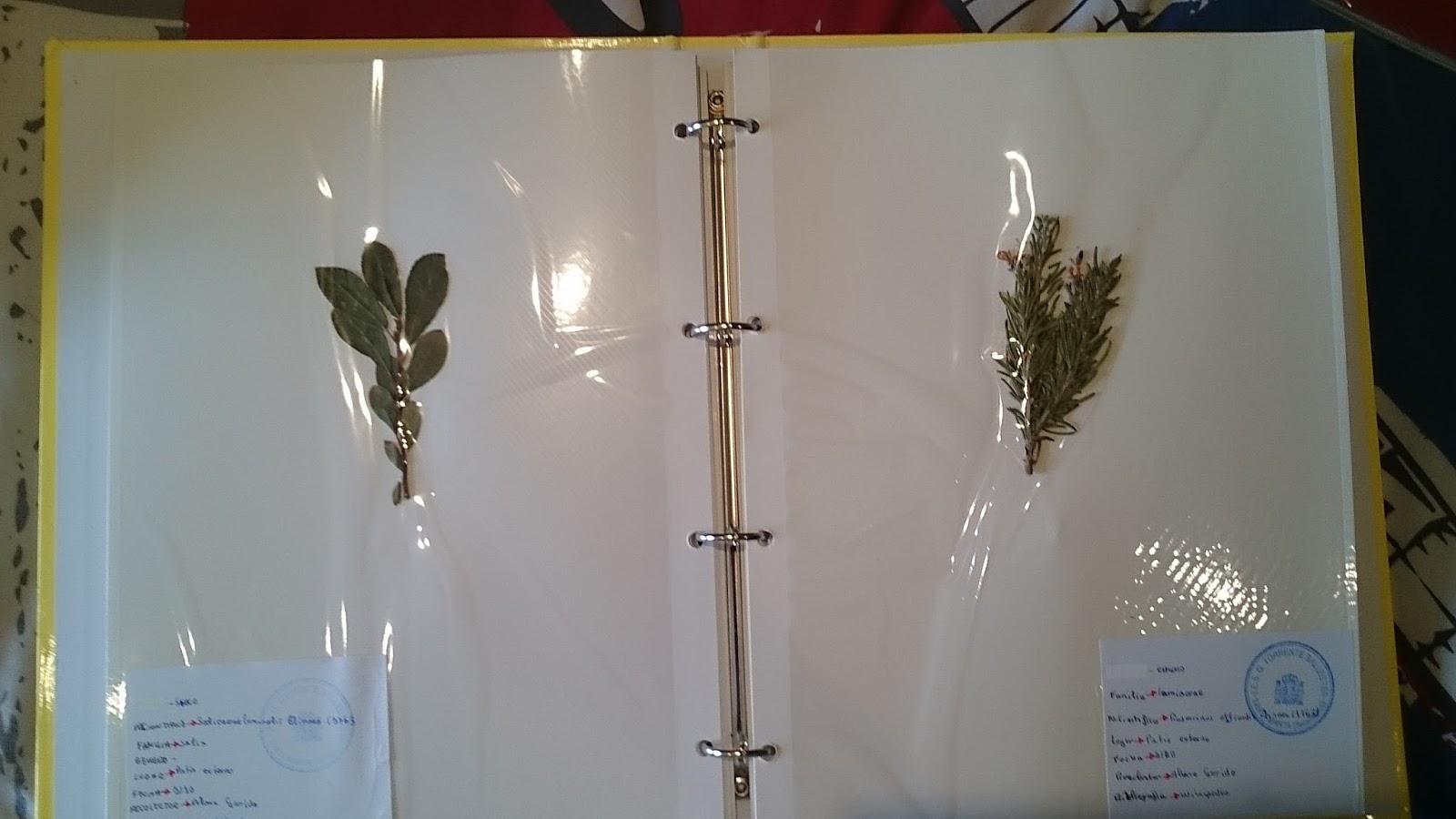 Ampliacionbiologia for Modelo de proyecto de plantas ornamentales