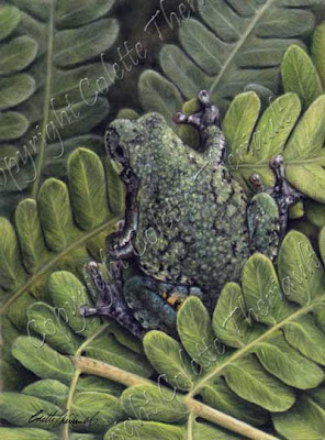 Gray Tree Frog Painting in pastel by North American Wildlife Artist Colette Theriault