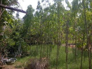 Glodogan Tiang 3 meter Tampungan