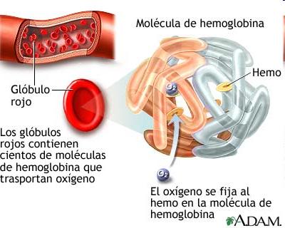 receptores intracelulares de hormonas esteroideas