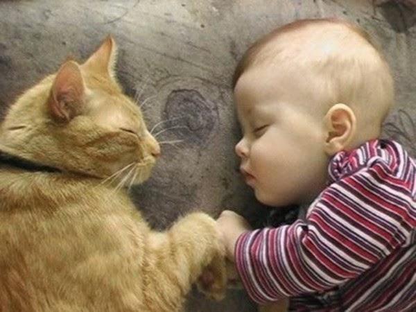 Những tư thế ngủ hài hước khó đỡ ai thấy cũng phải bật cười !