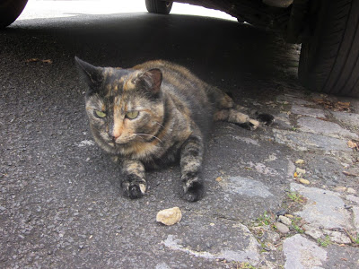 Black and ginger cat sitting on the road underneath a car
