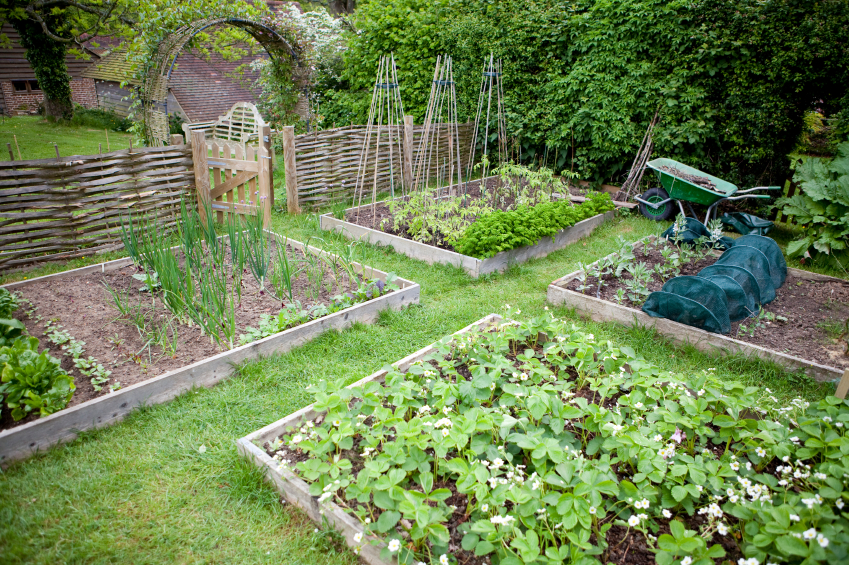 Above ground garden ideas house beautiful design for Raised veggie garden designs