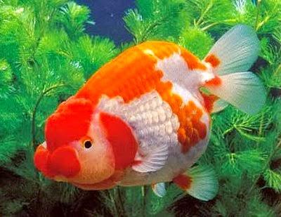 Arti Mimpi Ikan - www.ramalanmimpi.com