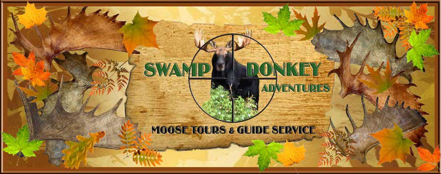 Swamp Donkey Adventures