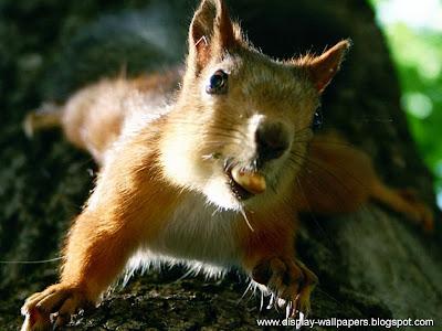 Squirrels Latest Desktop Wallpapers