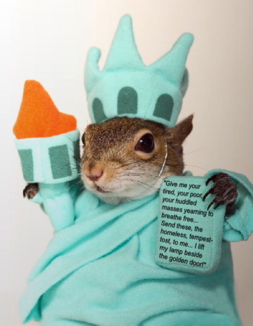 Funny 4th of July Squirrel