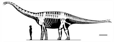 Spinophorosaurus jurasico