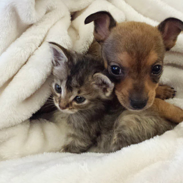 stray kitten abandoned puppy adele and chip-4