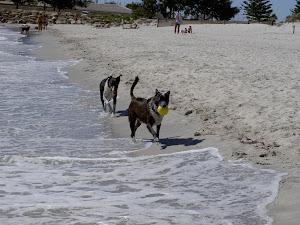 Badande hundar