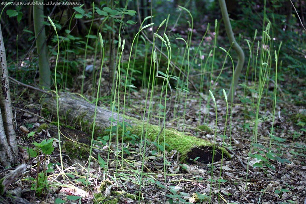 Sauvagement bon gratin - Ou trouver des cagettes en bois ...