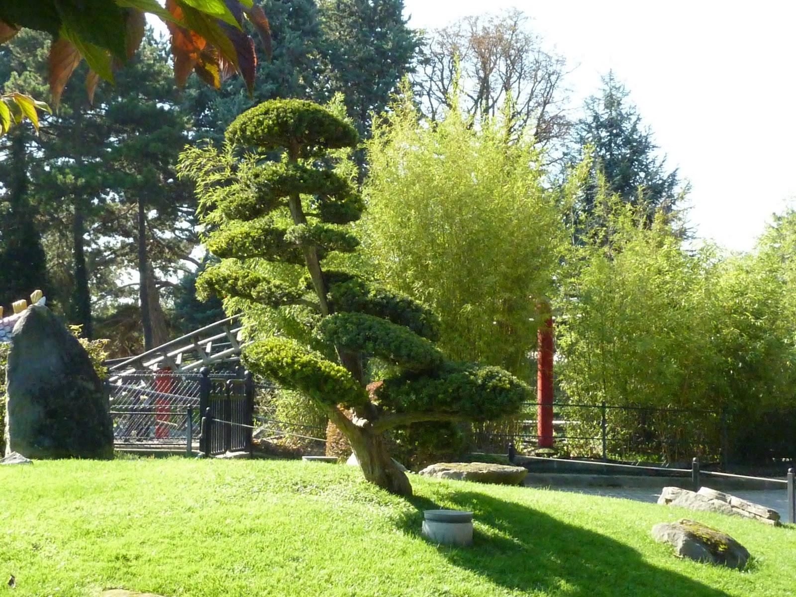 I V Cactus de Goutti¨re Jardin d Acclimatation sept 2011
