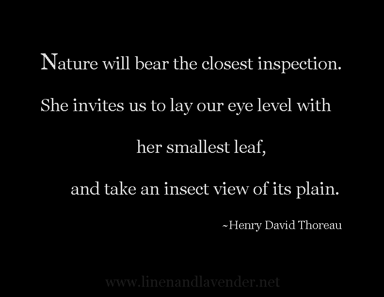 Nature will bear the closest inspection. She invites us to lay our eye level with her smallest leaf, and take an insect view of its plain  -Henry David Thoreau - as seen on linenandlavender.net - http://www.linenandlavender.net/p/inspired-quotes-and-images.html