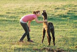 Waconia Llama Farm