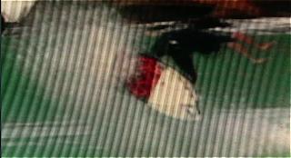 lente obscura vidéo surf