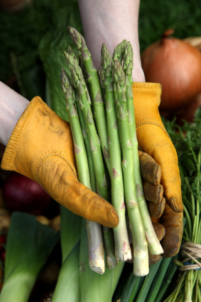how to grow asparagus in perth