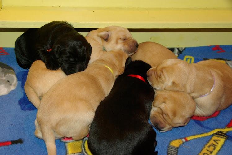 Puppy Heap